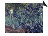 Irises Prints by Vincent van Gogh