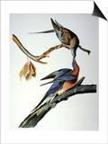 Audubon: Passenger Pigeon Poster by John James Audubon
