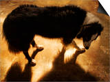 A Collie Dog Standing in the Evening Sunlight Prints by Susan Bein