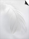 A White Feather Prints by Barbara Lutterbeck