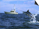 Marlin with Fishing Boat in Background Posters
