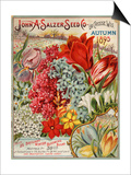 Seed Catalog Captions (2012): John A. Salzer Seed Co. La Crosse, Wisconsin, Autumn 1895 Prints