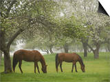 Two Horses Eating in Spring Pasture, Cape Elizabeth, Maine Posters by Nance Trueworthy