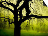 Green and Golden Landscape behind Tree Prints by Jan Lakey