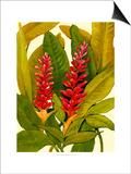 Tropical Red Ginger Prints by Tim O'toole