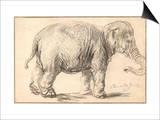An Elephant Prints by  Rembrandt Van Rhijn