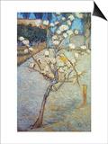 Van Gogh: Peartree, 1888 Poster by Vincent van Gogh