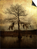 Cypress Print by Lydia Marano