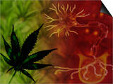 Medicinal Marijuana Posters by Carol & Mike Werner