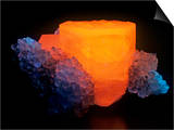 Calcite with Quartz Photographed under Short-Wave Ultraviolet (Uv) Light and Fluorescing Poster by Mark Schneider