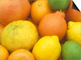 Citrus Fruits. Grapefruit, Tangerine, Ugli, Orange, Lemon, Lime, Tangelo and Clementine Prints by Wally Eberhart