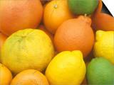 Citrus Fruits. Grapefruit, Tangerine, Ugli, Orange, Lemon, Lime, Tangelo and Clementine Prints by Wally Eberhart