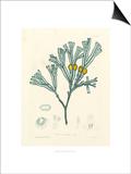 Luminous Seaweed II Prints by Henry Bradbury