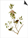 Audubon: Kinglet, 1827 Posters par John James Audubon