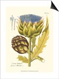 Artichoke, Pl. 462 Poster