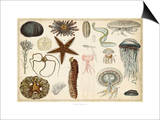 Antique Sealife Chart Art by  Vision Studio