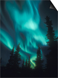 Aurora Borealis, Northern Lights, North America, Alaska, USA Posters by Tom Walker