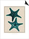 Coastal Starfish II Art by  Vision Studio