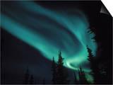 Aurora Borealis, Alaska, USA Prints by Tom Walker