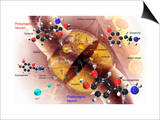 Biomedical Illustration of the Synthesis of Norepinephrine in a Nerve Cell Art by Carol & Mike Werner