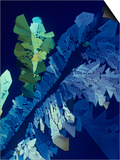 Tartaric Acid Crystals Viewed with Polarized Light Posters by George Musil