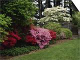 Azaleas, New Jersey State Botanical Garden, New Jersey, USA Poster