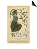 Floral Botanica I Prints by  Turpin