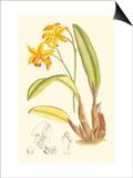 Orchid Plenty IV Art by Samuel Curtis