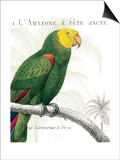 Parrot Botanique I Stampe di Hugo Wild