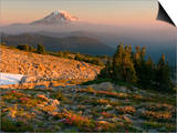 Mt Adams from Timberline in the Goat Rocks Wilderness with Heather, Paintbrush, and Lupine Posters by David Cobb
