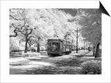 New Orleans: Streetcar Prints by Carol Highsmith