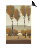 Tall Birches I Posters by Tim O'toole