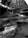 Vitz Prints by Jim Crotty