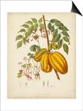 Twining Botanicals V Prints by Elizabeth Twining