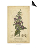 Floral Botanica IV Posters by  Turpin
