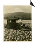 Daffodil Field, Automobile and Mount Rainier, ca. 1929 Posters by Marvin Boland