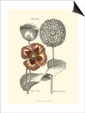 Tinted Floral II Posters by Besler Basilius