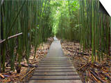 Boardwalk Trail Through a Bamboo Forest on Maui, Hawaii, USA Posters by Patrick Smith