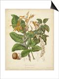 Twining Botanicals VI Posters by Elizabeth Twining