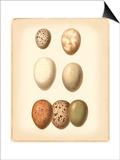 Bird Egg Study II Kunst av  Vision Studio