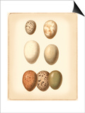 Bird Egg Study II Arte por  Vision Studio