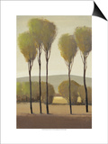 Tall Birches II Prints by Tim O'toole