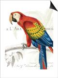 Parrot Botanique II Stampa di Hugo Wild