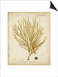 Esper Antique Coral IV Print by Johann Esper