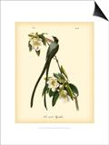 Tyran des savanes Poster par John James Audubon