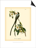 Fork-Tailed Flycatcher Poster by John James Audubon