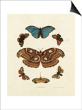 Butterflies II Prints by George Wolfgang Knorr