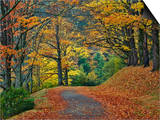 Walking Trail around Bass Lake in the Autumn, Blowing Rock, North Carolina, USA Prints by Adam Jones