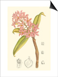 Orchid Plenty III Posters by Samuel Curtis