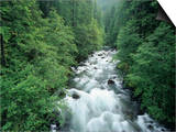Ohanapecosh River, Mt. Rainier National Park, Washington, USA Prints by Adam Jones